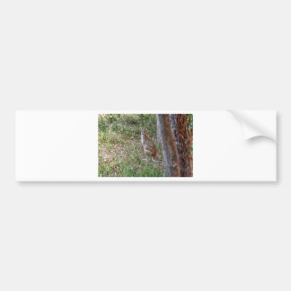 WALLABY RURAL QUEENSLAND AUSTRALIA ART EFFECTS BUMPER STICKER