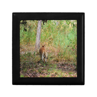 WALLABY RURAL QUEENSLAND AUSTRALIA GIFT BOX