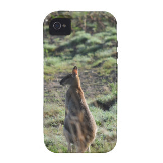 WALLABY RURAL QUEENSLAND AUSTRALIA iPhone 4 COVER