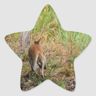 WALLABY RURAL QUEENSLAND AUSTRALIA STAR STICKER