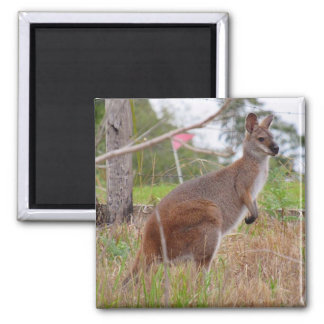 wallaby square magnet