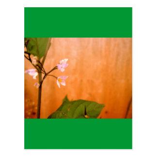 Wallflower Postcard