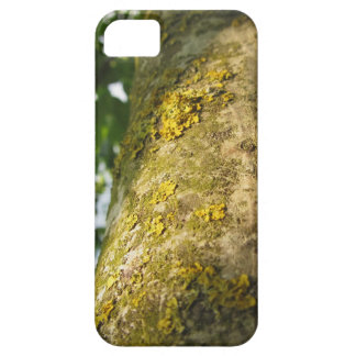 Walnut tree trunk with yellow moss fungus barely there iPhone 5 case