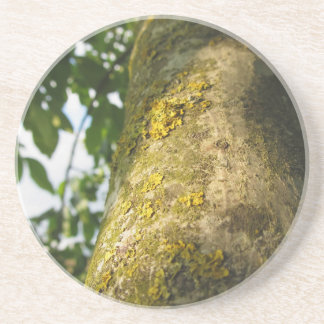 Walnut tree trunk with yellow moss fungus beverage coaster