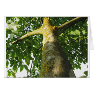 Walnut tree trunk with yellow moss fungus card