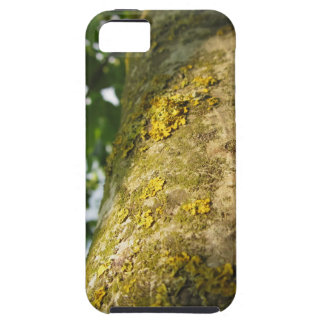 Walnut tree trunk with yellow moss fungus case for the iPhone 5