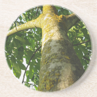 Walnut tree trunk with yellow moss fungus drink coaster