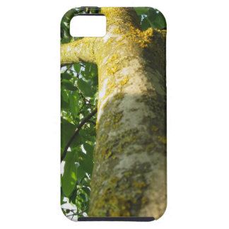 Walnut tree trunk with yellow moss fungus iPhone 5 cover
