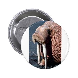 Walrus Buttons