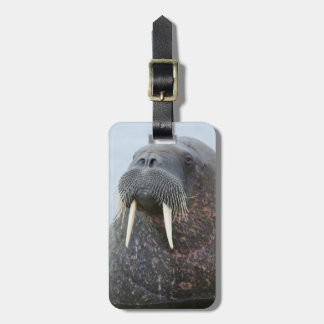 Walrus Close-up in water, Norwaying Luggage Tag