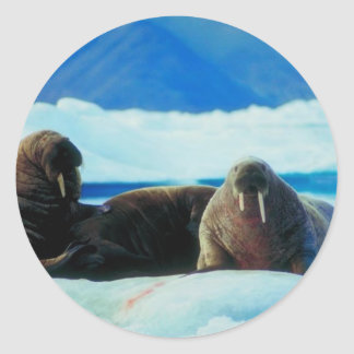 Walrus Group Classic Round Sticker