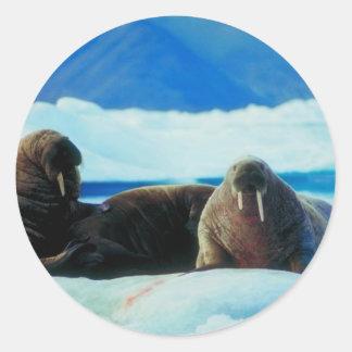 Walrus Group Round Sticker