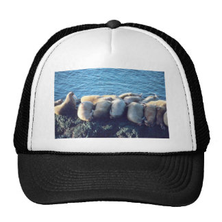 Walrus Mesh Hats