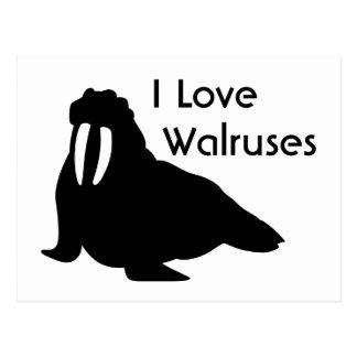 Walrus Love Postcard