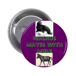 Walrus Mates With Mule Pinback Buttons