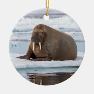 Walrus resting on ice, Norway Ceramic Ornament