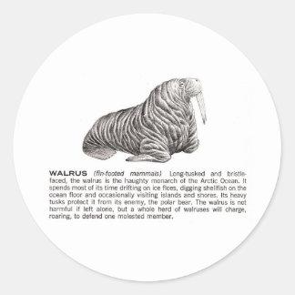 walrus round sticker