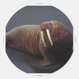 Walrus Stickers
