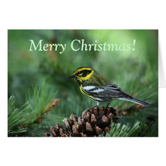 warbler in a winter setting Christmas card