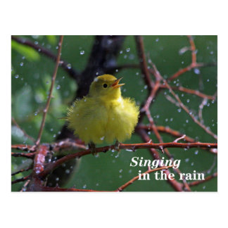 Warbler Postcard