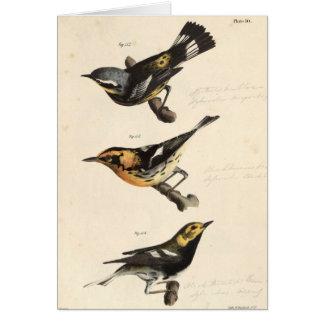 Warblers Card