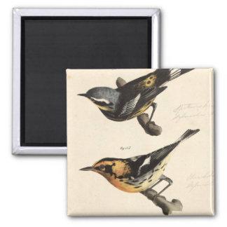 Warblers Magnet