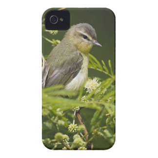 Warbling Vireo (Vireo gilvus) foraging on South iPhone 4 Cases