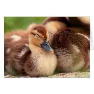 Warm fuzzy ducklings card