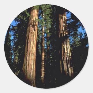 Warm redwoods stickers