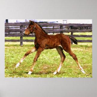 Warmblood Foal Horse Poster Print