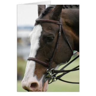 Warmblood Horse Photo  Greeting Card