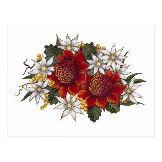 Warratha Flannel Flower Post Card