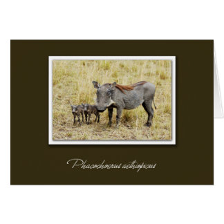 Warthog with piglets safari cards