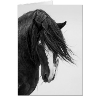 Washakie's Portrait Wild Horse Greeting Card