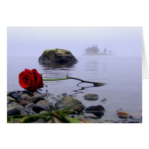 Washed Ashore Red Rose Greeting Cards