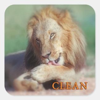 Washing lion square sticker