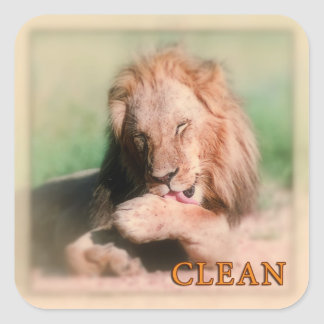 Washing lion square stickers