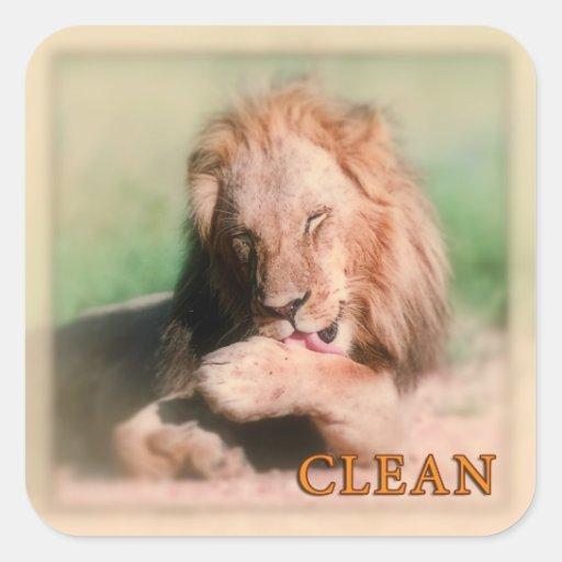Washing lion square stickers