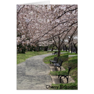 washington dc cherry blossom card