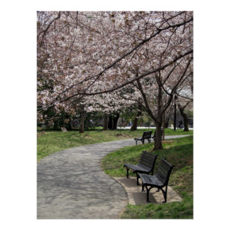 washington dc cherry blossom poster