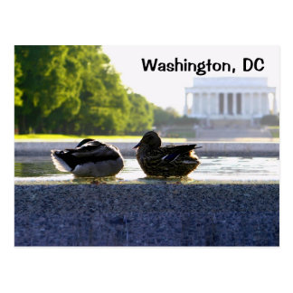 Washington, DC:  Ducks at the WWII Memorial Postcard