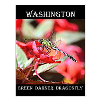Washington Green Darner Dragonfly Postcard