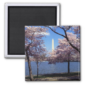 Washington Monument Through Cherry Blossoms Square Magnet