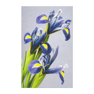 Washington, Redmond, Purple Irises Gallery Wrap Canvas