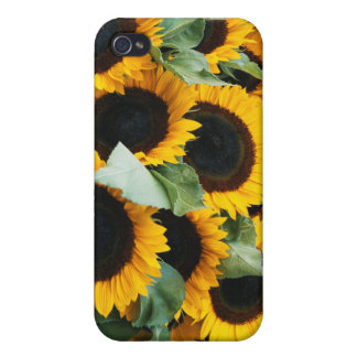 Washington, Seattle, Sunflower for sale pike iPhone 4 Cases