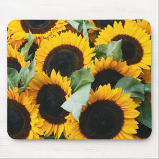Washington, Seattle, Sunflower for sale pike Mouse Pad