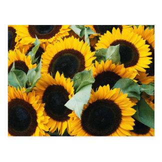 Washington, Seattle, Sunflower for sale pike Postcard