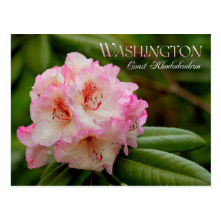 Washington State Flower: Coast Rhododendron Postcard
