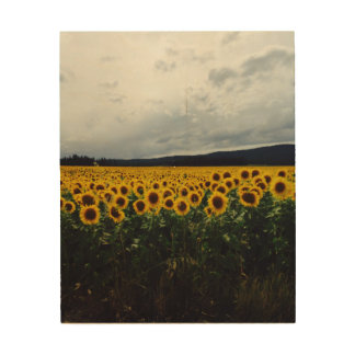 Washington Sunflower Field Wood Print