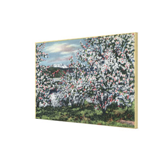 Washington - View of Apple Trees in Blossom Canvas Prints